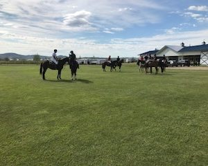 polo players mounted on horses