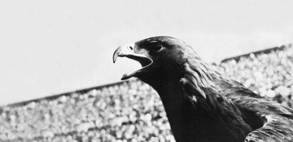 Black & White Photo of Eagle in Stadium