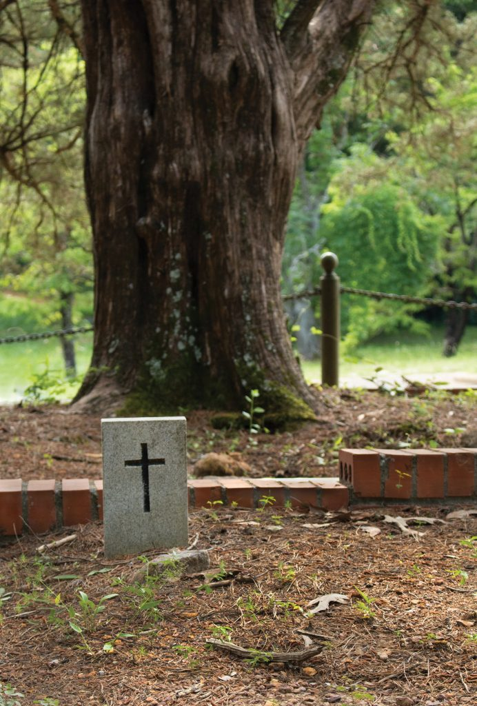 Tree and head stone with a cross only in Baptist Hill Cemetery